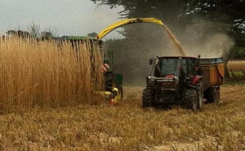 ensieuse et tracteur avec remorque en pleine récolte du miscanthus