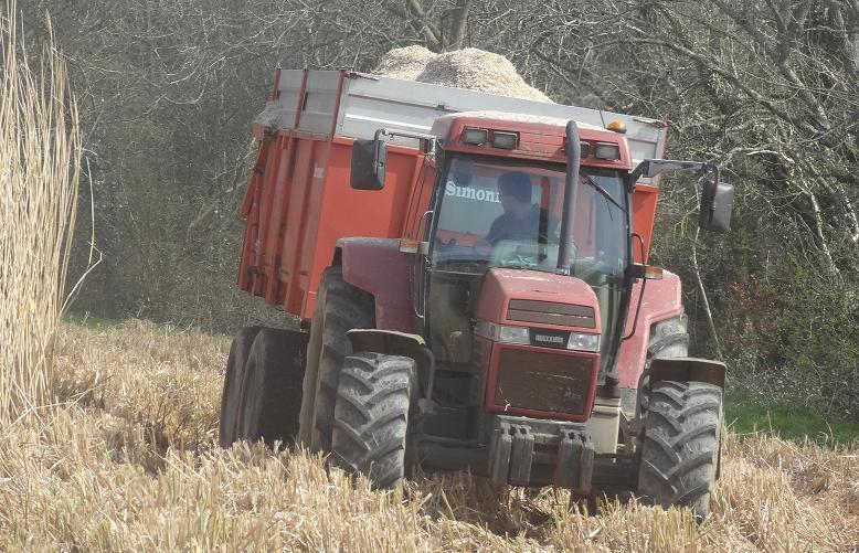 Récolte de Miscanthus le 15 mars 2014 à Pont-Croix